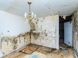 Mold Restoration Oregon City OR