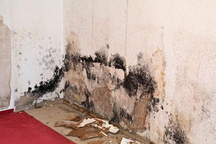 Severe Mold Damage